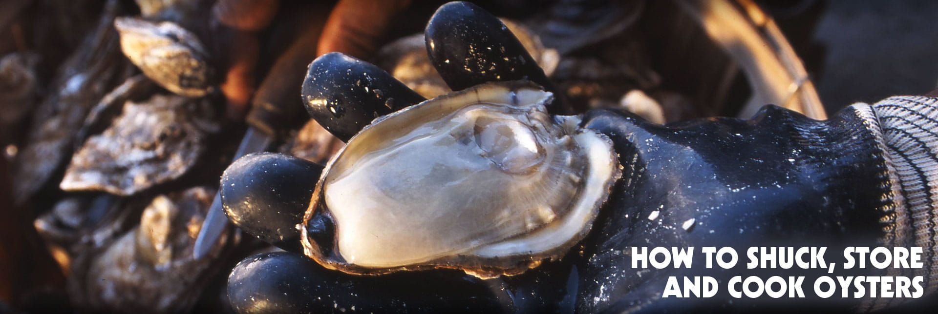 How to Shuck, Store, and Cook Virginia Oysters