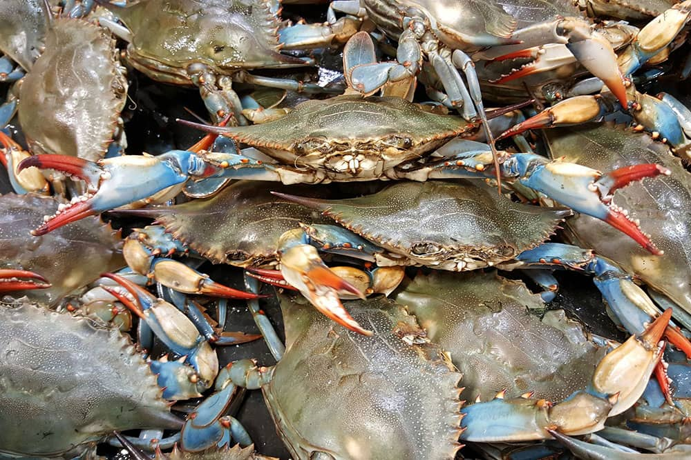 Annual Summer Seafood Festival at Mountain Cove Vineyard